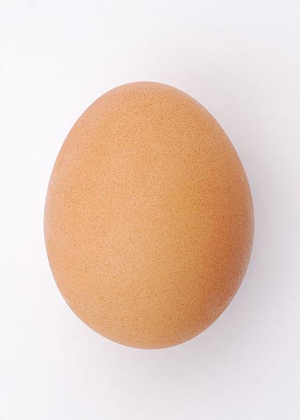 428px-Chicken_egg_2009-06-04